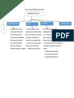 Mapa Conceptual de de La Biomoleculas