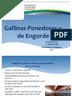 Presentación Gallinas de Engorde