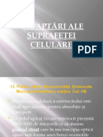 LP 5 Adaptari Ale Suprafetei Celulare