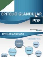 3a. Epitelio Glandular