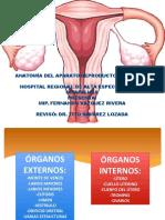 1. Anatomía del aparato genital femenino - Fernando Vázquez Rivera.pptx