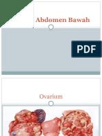 Tumor Abdomen Bawah