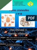 Pares Craneales 1 y 2