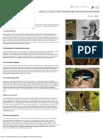 Birds-Of-Paradise Project_ Female Choice