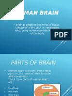 human-brain-160110211748