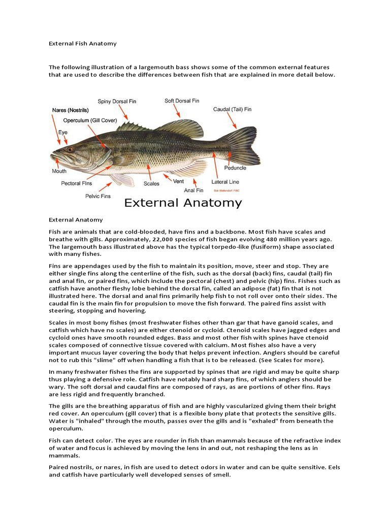 External Fish Anatomy | Fish | Digestion