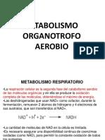 3.RESPIRACION CELULAR.pdf