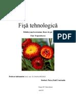 Fisa Tehnologica Helicrisum