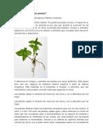 Cómo se alimentan las plantas.docx