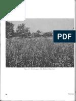 FM 31-30 Jungle Training and Operations (1965) (2-5)