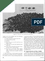 FM 31-30 Jungle Training and Operations (1965) (4-5)