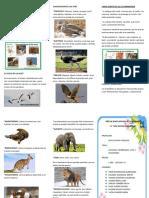 Caracteristicas de Las Aves