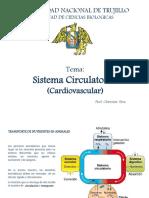 3.1 Sistema Cardiovascular Hemodinamica