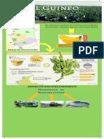 Infografía El Guineo