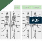 Principales Huesos y Articulaciones