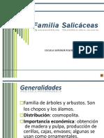 Salicáceas