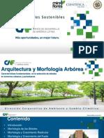 P1_Arquitectura Arbórea Característica Fundamental en La Selección de Árboles en Entornos Urbanos