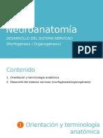 3. Neuroanatomía. Desarrollo Del Sistema Nervioso (Morfogénesis y Organogénesis)