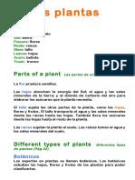 Unit 2 Plants