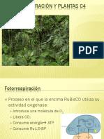 Fotorrespiración y Plantas c4