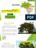 Sementes Florestais Cf 2017 Pk