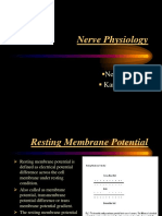 Nerve Physiology