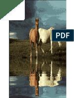 CAVIDAD ABDOMINAL GENERALIDADES.pdf