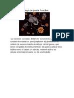 Tecnología de Punta Nanobot.docx13