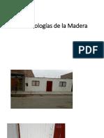 Las Patologías de La Madera Expo