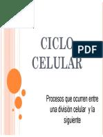 Ciclo celular y replicación
