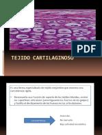 tejido_cartilaginoso_2014