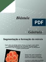 Morula - Blastula e Gástrula
