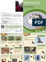 Birds ID Guide of the High Uplands