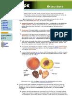 Estructura de Los Frutos