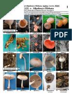 Hongos - R. N. Allpahuayo-Mishana, Iquitos, Loreto, PERU (0).pdf