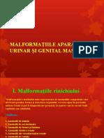 Curs 14 Malf Genital Masculin Partea 1