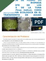 Biosorcion de Plomo Usando Los Cladodios de La Tuna