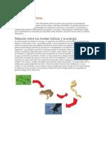 Cadena Alimenticia y Relacion Entre Los Niveles Troficos y La Energia