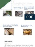 vizcacha-parte- 3 y 5.pptx