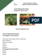 TIPOS DE PROPAGACION ASEXUAL..pptx