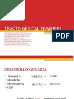 TRACTO-GENITAL-FEMENINO-FINAL.pptx