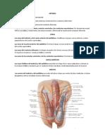 Anatomia Venas