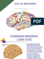 6635670-areas-de-brodmann-130214133428-phpapp01