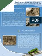 Amphibiens Salamandres Tritons - Fiche péda Eau & Rivières de Bretagne