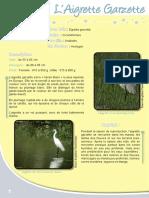 Aigrette Garzette - Fiche péda Eau & Rivières de Bretagne