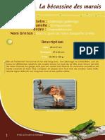 Becassine des Marais - Fiche péda Eau & Rivières de Bretagne