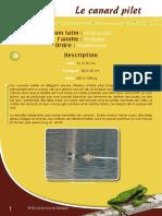 Canard Pilet - Fiche péda Eau & Rivières de Bretagne