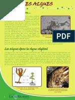 Algues - Fiche péda Eau & Rivières de Bretagne