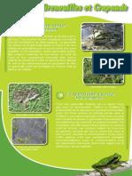 Amphibiens Crapauds et Grenouilles - Fiche péda Eau & Rivières de Bretagne