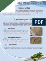 Hétéroptères - Fiche péda Eau & Rivières de Bretagne